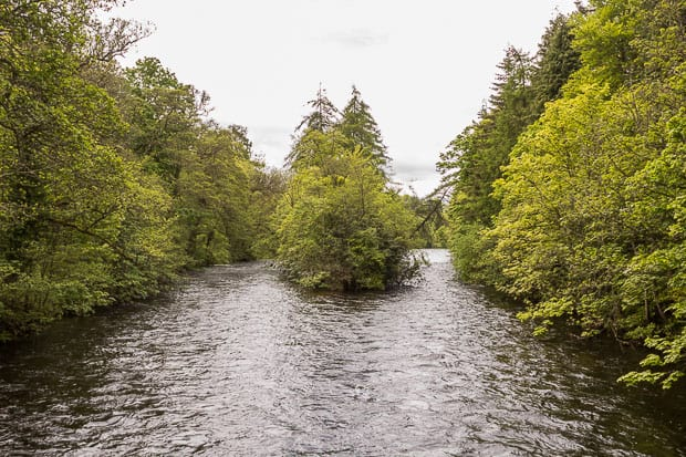Island of trees in the middle of the River Ness.