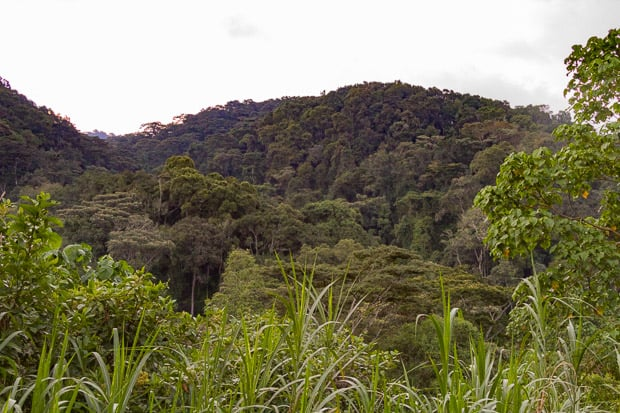 View of the forest and mountains surrounding Gorilla Valley Lodge Bwindi Impenetrable National Park Uganda.
