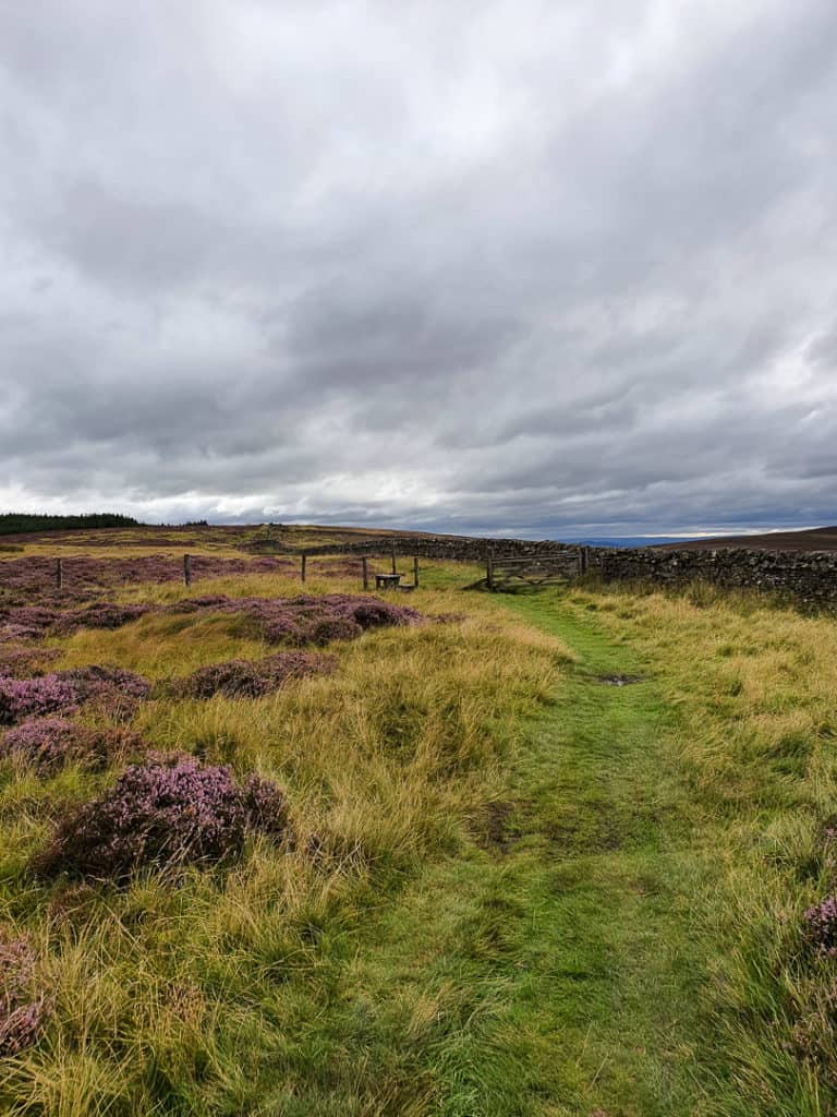 Path looking westwards following The Southern Upland Way