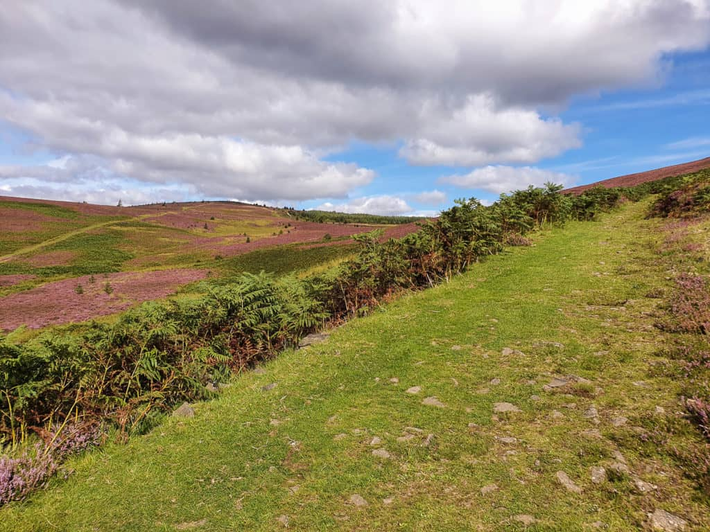 Looking back up track that comes down via Long Philip Burn and Peat Law Hill.
