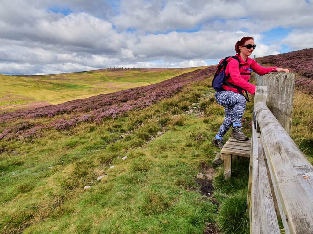 Lynne climbing over a stile gate on route from Broadmeadows to Philiphaugh to Newark